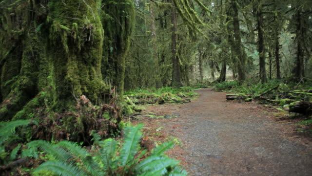 vídeos de stock, filmes e b-roll de cs, hoh rain forest, hall of mosses, olympic national park, washington - olympic national park