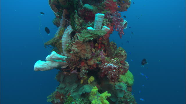 hoki, coral, post, chuuk lagoon, south pacific  - seabed stock videos & royalty-free footage