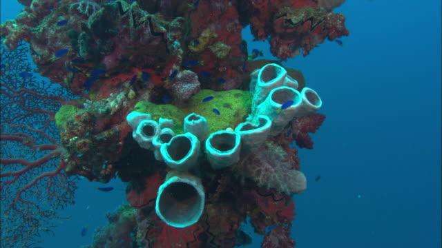 vídeos y material grabado en eventos de stock de hoki, post, sponge, chuuk lagoon, south pacific  - esponja