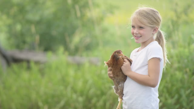 holding a farm chicken - chicken bird stock videos and b-roll footage