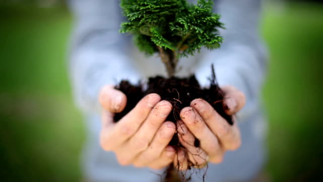 holding a plant - tree hugging stock videos & royalty-free footage