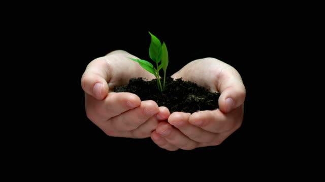HD :保持で包まれた芽が表す希望