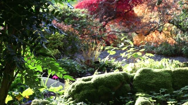 holehird gardens in autumn, windermere, cumbria, uk. - moss stock videos & royalty-free footage