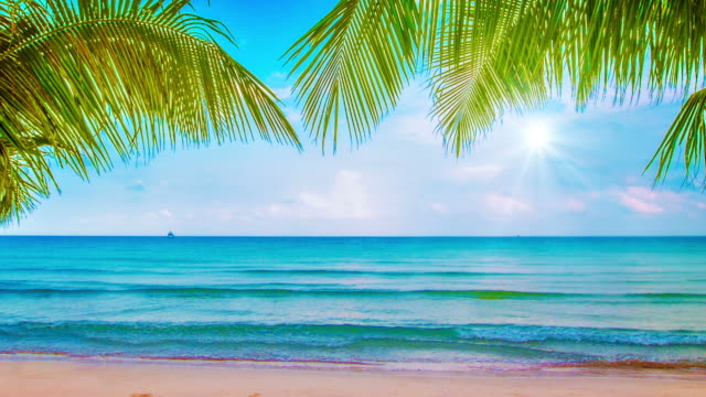 holiday beach - palm tree stock videos & royalty-free footage