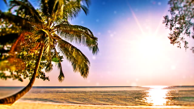 holiday dream - coconut palm tree stock videos & royalty-free footage