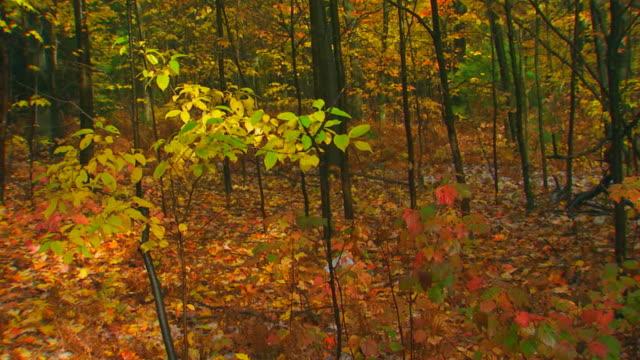 Holland, MichiganAutumn Colors