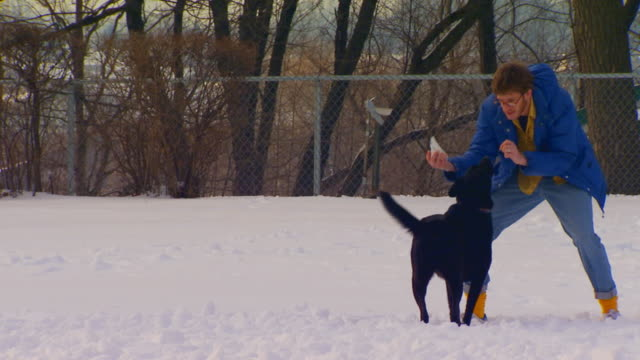holland, michigandog trainer gives up on run away dog - pampered dog stock videos and b-roll footage