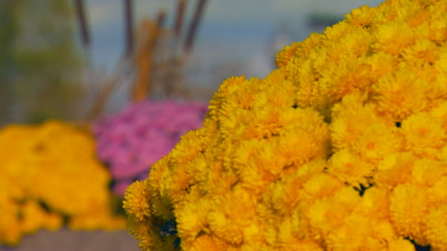 holland, michiganmums in a planter - bulrush stock videos & royalty-free footage