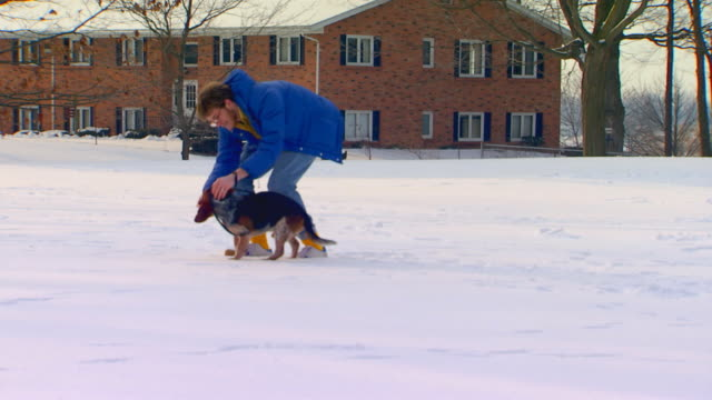 holland, michiganowner and dog - pampered pets stock videos and b-roll footage