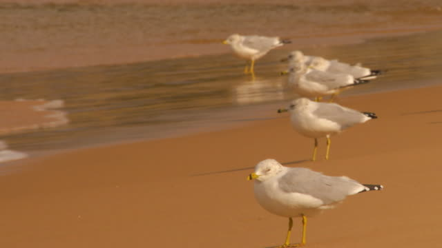 Holland, MichiganSeagulls on the beach