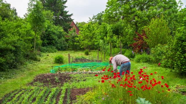 crane: home grown produce - organic farm stock videos & royalty-free footage