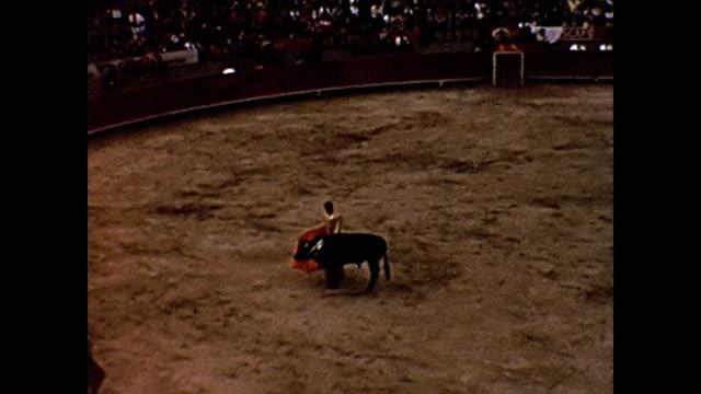 vidéos et rushes de 1954 home movie -dead bull being dragged by matadors - mexico city - 1954