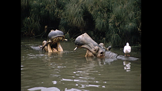 1957 Home Movie - Disneyland jungle cruise ride