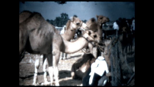 home movie footage of the city of beersheba and the arab souk. goods and livestock are traded in the open air market. - camel stock videos & royalty-free footage