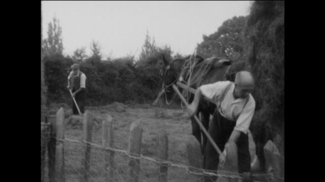 home movie footage of traditional haymaking on an english farm in the 1930s - fieno video stock e b–roll