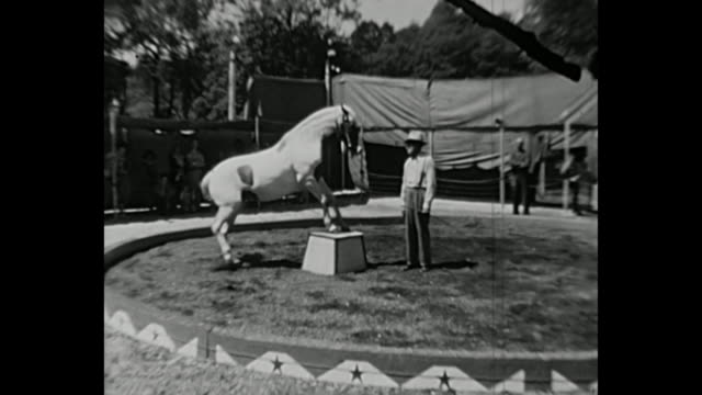 1936 home movie - horses and ponnies as circus performers - circus stock-videos und b-roll-filmmaterial