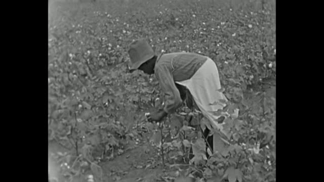 1934 home movie - picking cotton - picking stock videos & royalty-free footage