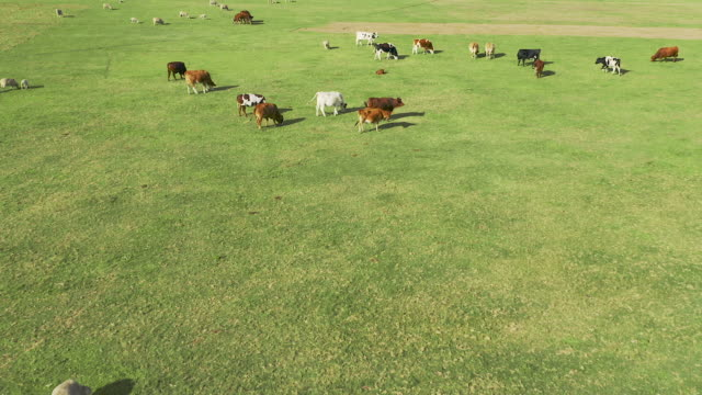 home of the herd - ranch home stock videos & royalty-free footage
