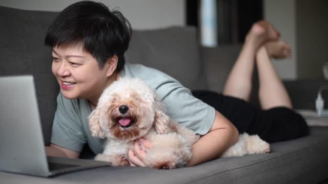 vídeos de stock, filmes e b-roll de home office video conference com roupas casuais usando laptop junto com seu poodle de brinquedo de estimação - pet clothing