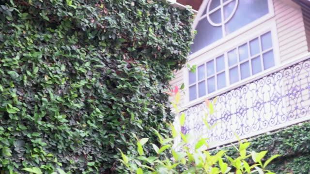 vidéos et rushes de maison révélé de tree - façade