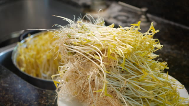homegrown green bean sprouts amid 2020 covid-19 virus pandemic - green bean stock videos & royalty-free footage