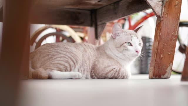 vídeos y material grabado en eventos de stock de gato sin hogar sentado debajo de la mesa. - dormitar