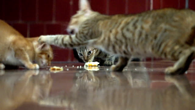 Homeless Cat slap others to eating food