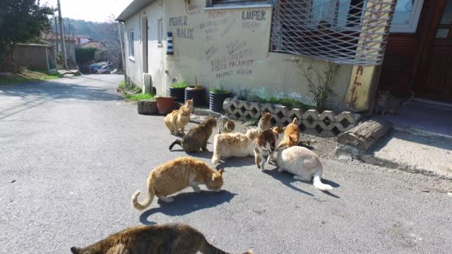 Heimatlosen Katzen essen Fisch vor ein altes restaurant