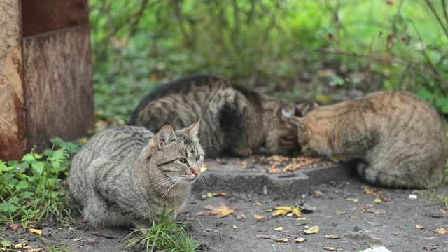 homeless cats live and eat cat food together. - small group of animals stock videos & royalty-free footage
