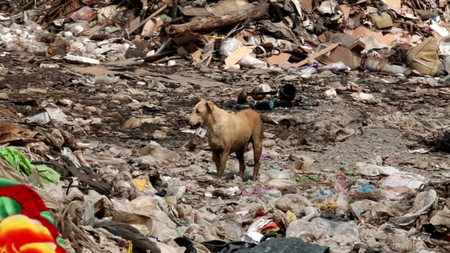 Homeless dirty dog in Garbage