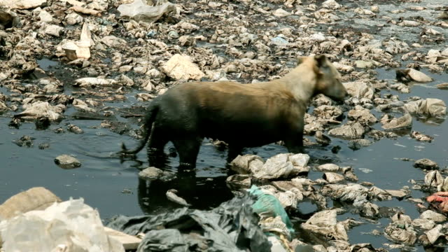 homeless dirty dog - pollution stock videos & royalty-free footage
