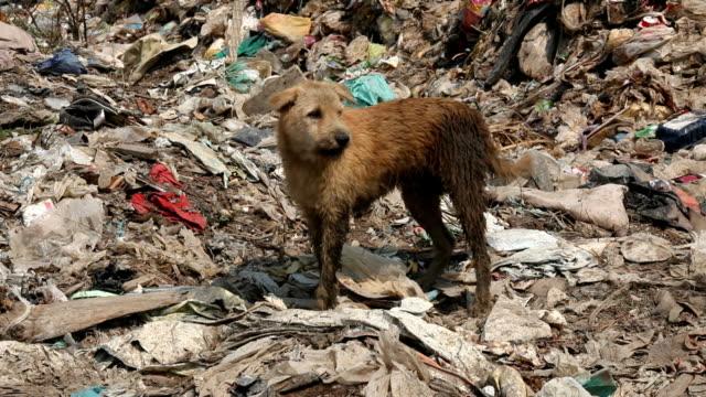 vídeos y material grabado en eventos de stock de homeless sucio perro - hambriento