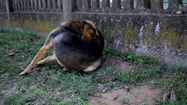homeless dog stretching - flea insect stock videos and b-roll footage