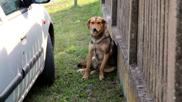 stockvideo's en b-roll-footage met dakloze hond - rabiës