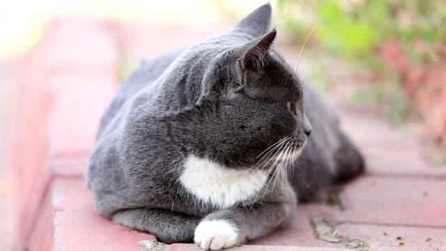 homeless gray cat sits outdoors - byakkaya stock videos and b-roll footage