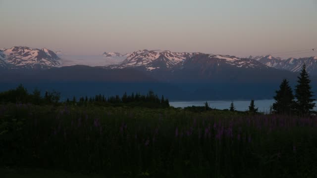 stockvideo's en b-roll-footage met homer, alaska sunset in field of fireweed - alaska verenigde staten
