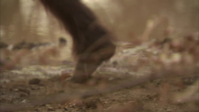 vidéos et rushes de homo erectus creatures walk across a muddy riverbank. - poils d'un animal