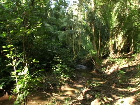 MS, Honduras, Tropical jungle