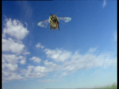 honey bee flies to camera blue sky and old car in background - ブンブン鳴る点の映像素材/bロール