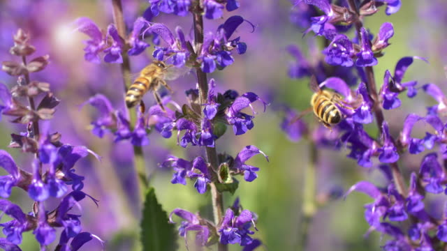 honey bee - pollination stock videos & royalty-free footage