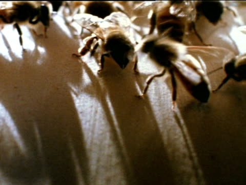 honey bee worker guard standing at hive entrance touching bees as they enter - guarding stock videos & royalty-free footage