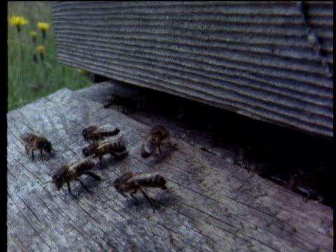 honey bees at entrance of wooden hive - ブンブン鳴る点の映像素材/bロール