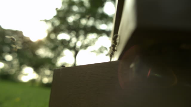 honey bees (apis sp.) at entrance to wooden hive, low angle view - animal markings stock videos & royalty-free footage