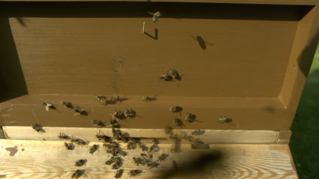 honey bees (apis sp.) at entrance to wooden hive - animal markings stock videos & royalty-free footage