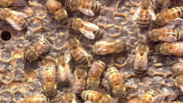 honey bees capping the honeycomb - wax stock videos & royalty-free footage