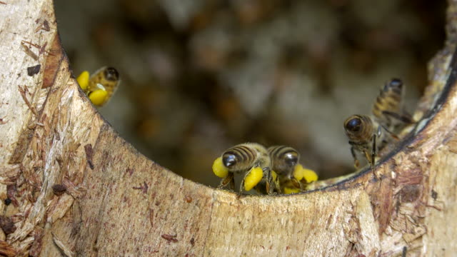 honey bees in the birdhouse - named wilderness area stock videos & royalty-free footage