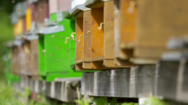 vidéos et rushes de abeilles de miel grouillant des boîtes de ruche en bois - ruche
