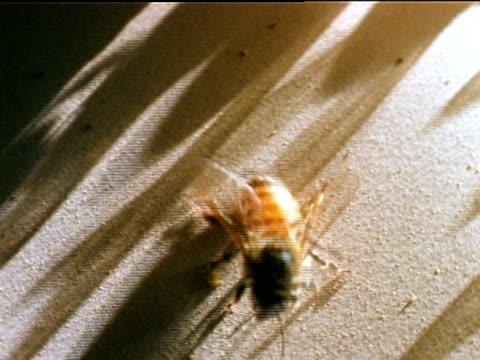 vídeos de stock, filmes e b-roll de td honey bees walking on floor of hive entrance some walking in some walking out toward sunlight - abelha obreira
