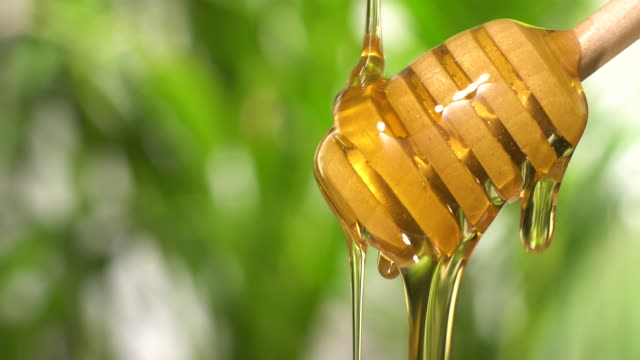 (Real time) Honey flowing from a wooden honey dipper with copy space