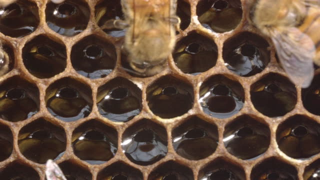 Honey Stored In The Honeycomb